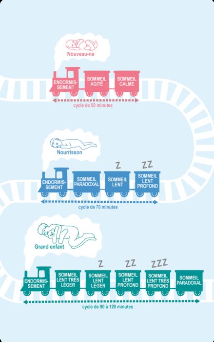 Les cycles du sommeil d'un nouveau né, d'un nourrisson et d'un enfant.